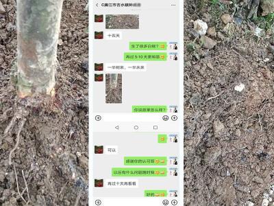 石榴树生根肥哪家好?