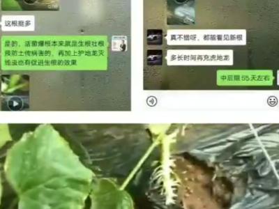 怎样防治黄瓜苗上的根结线虫病害?